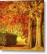 Autumn Colors Metal Print by Wim Lanclus