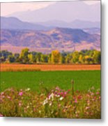 Autumn Flowers At Harvest Time Metal Print by James BO  Insogna