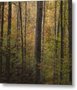 Autumn In The Woods Metal Print by Andrew Soundarajan