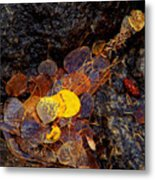 Autumn Jewels.. Metal Print by Al  Swasey