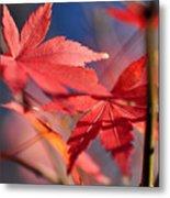 Autumn Maple Metal Print by Kaye Menner