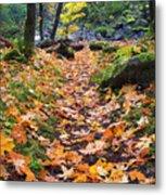 Autumn Path Metal Print by Mike  Dawson