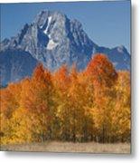 Autumn Splendor In Grand Teton Metal Print by Sandra Bronstein