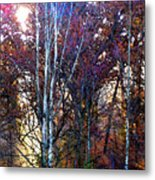 Autumn Sunlight Metal Print by Jane Schnetlage
