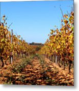 Autumn Vines Metal Print by K McCoy