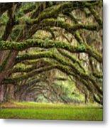 Avenue Of Oaks - Charleston Sc Plantation Live Oak Trees Forest Landscape Metal Print by Dave Allen