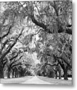 Avenue Of Oaks Charleston South Carolina Metal Print by Stephanie McDowell