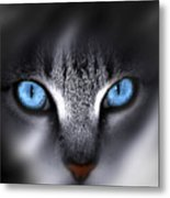 Baby Blues Metal Print by Cecil Fuselier