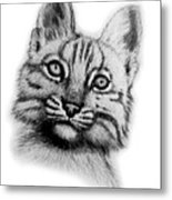 Baby Bobcat Metal Print by Nick Gustafson