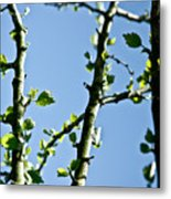 Baby Spring Tree Leaves 01 Metal Print by Ryan Kelly