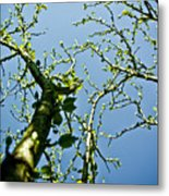 Baby Spring Tree Leaves 02 Metal Print by Ryan Kelly