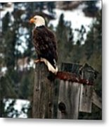 Baldy On A Post Metal Print by Don Mann