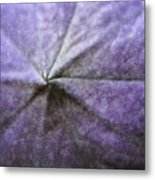 Balloon Flower Metal Print by Teresa Mucha