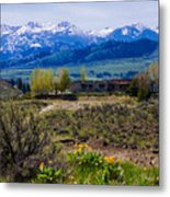 Balsamroot Flowers And North Cascade Mountains Metal Print by Omaste Witkowski