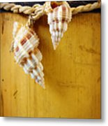 Bamboo And Conches Metal Print by Carlos Caetano