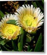 Beach Flower Metal Print by Joyce Woodhouse