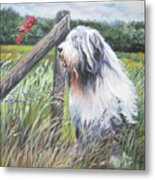 Bearded Collie With Cardinal Metal Print by Lee Ann Shepard