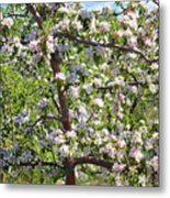 Beautiful Blossoms - Digital Art Metal Print by Carol Groenen