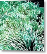 Beautiful Coral Reef 2 Metal Print by Lanjee Chee