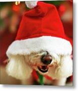 Bichon Frise Dog In Santa Hat At Christmas Metal Print by Nicole Kucera