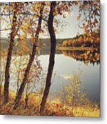 Birch Trees And Reflected Autumn Colors Metal Print by Stefan Mendelsohn