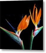Birds Of Paradise Metal Print by Terence Davis