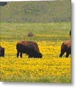 Bison Herd Metal Print by Alan Lenk