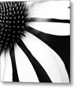 Black And White Flower Maco Metal Print by Copyright Johan Klovsjö