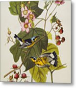 Black And Yellow Warbler Metal Print by John James Audubon