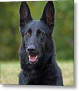 Black German Shepherd Dog Metal Print by Sandy Keeton