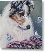 Blue Merle Collie Pup Metal Print by Lee Ann Shepard