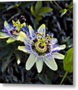 Blue Passion Flower Metal Print by Kelley King