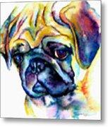 Blue Pug Metal Print by Christy  Freeman