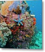 Blue Starfish On Coral Reef, Raja Metal Print by Beverly Factor