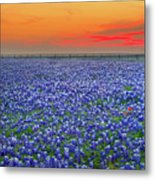 Bluebonnet Sunset Vista - Texas Landscape Metal Print by Jon Holiday