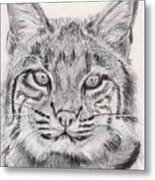 Bobcat Metal Print by Marqueta Graham
