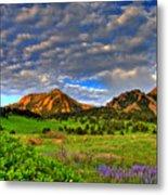 Boulder Spring Wildflowers Metal Print by Scott Mahon