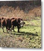 Bovine Pastures Metal Print by B Rossitto