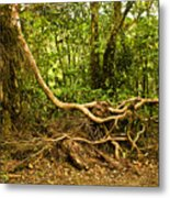 Branching Out In Costa Rica Metal Print by Madeline Ellis
