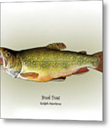 Brook Trout Metal Print by Ralph Martens