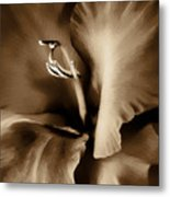 Brown Velvet Gladiolus Flower Metal Print by Jennie Marie Schell