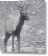Buck In Fog On Hurricane Ridge - Olympic National Forest - Olympic National Park Wa Metal Print by Christine Till