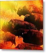 Buffalo Sun Metal Print by Terril Heilman