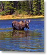 Bull Moose In The Mountains Metal Print by Terril Heilman