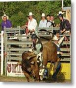 Bull Rider Metal Print by Phyllis Britton