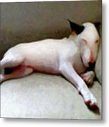 Bull Terrier Sleeping Metal Print by Michael Tompsett