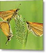 Butterflies Metal Print by Mircea Costina Photography