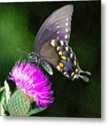 Butterfly And Thistle Metal Print by Jeff Kolker