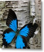 Butterfly Metal Print by Andreas Freund