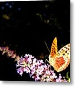 Butterfly Banquet 1 Metal Print by Will Borden